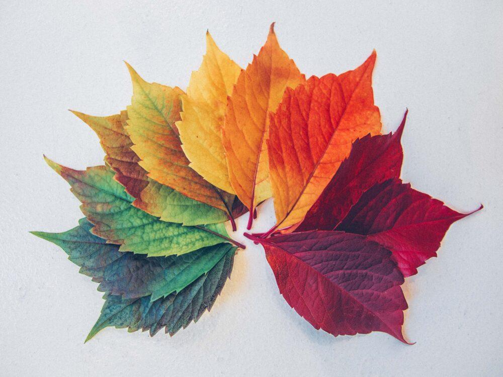 Different colored leaves. Photo by Chris Lawton (https://unsplash.com/photos/c0rIh0nFTFU)